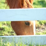 2014 Goal Update: Photography! {with Simple Tips & Tricks}
